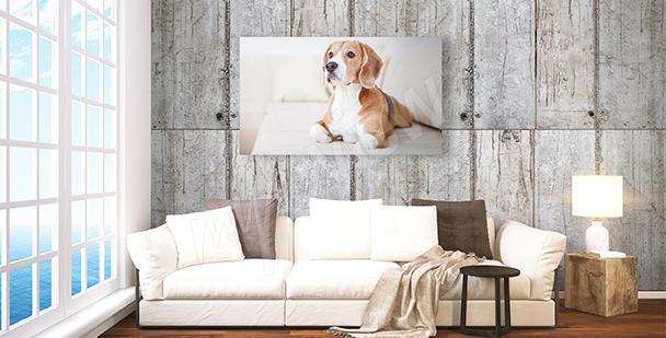 Obraz pes do obývacího pokoje