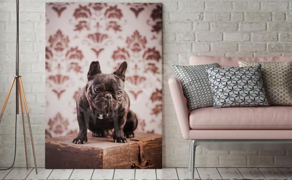 Obraz pes francouzský buldoček