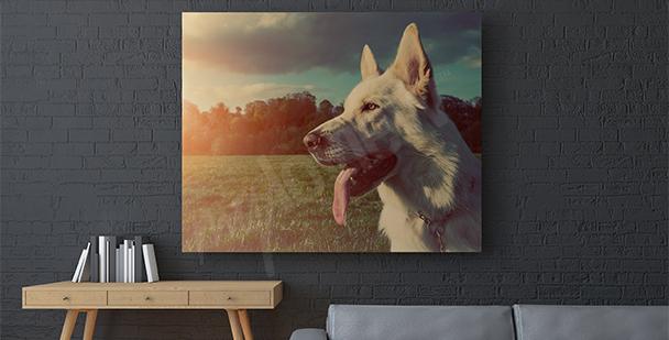 Obraz pes v parku