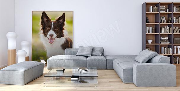 Obraz portrét psa