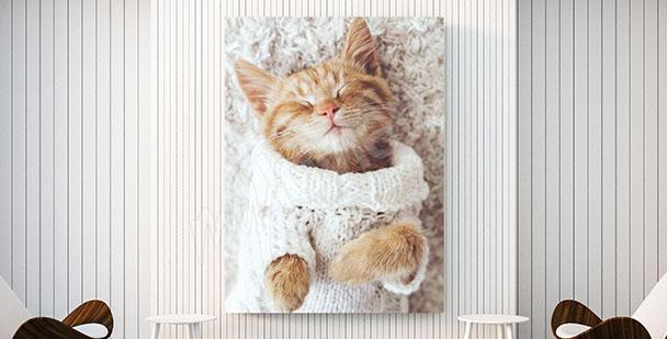Obraz s malou kočičkou