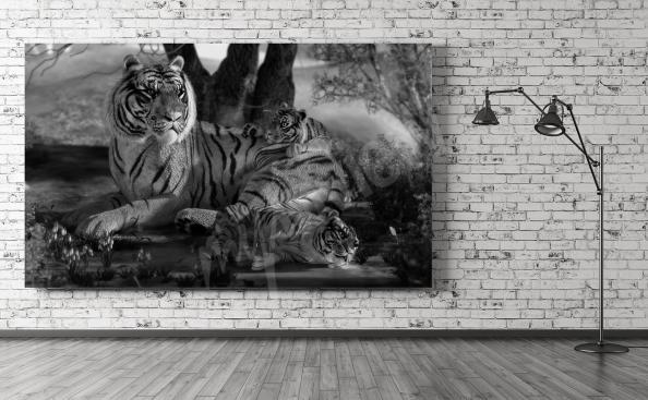 Obraz s tygry v černé a bílé