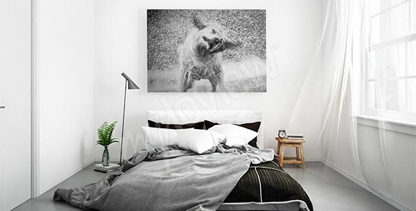 Obraz se psem černobílý