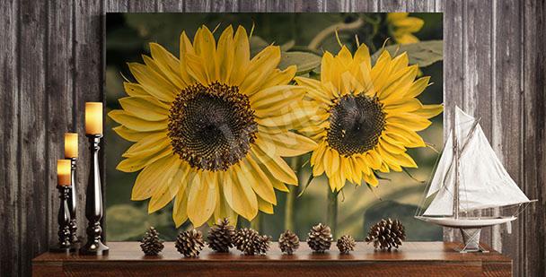 Obraz se slunečnicemi do obývacího pokoje
