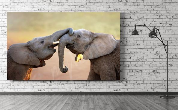 Obraz sloni