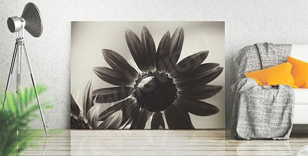 Obraz slunečnice černobílá