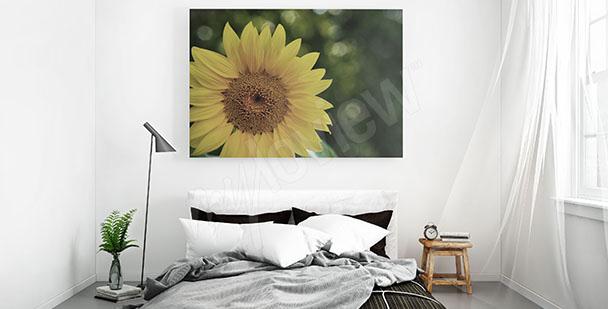 Obraz slunečnice do ložnice