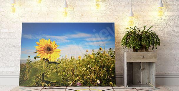 Obraz slunečnice do předsíně