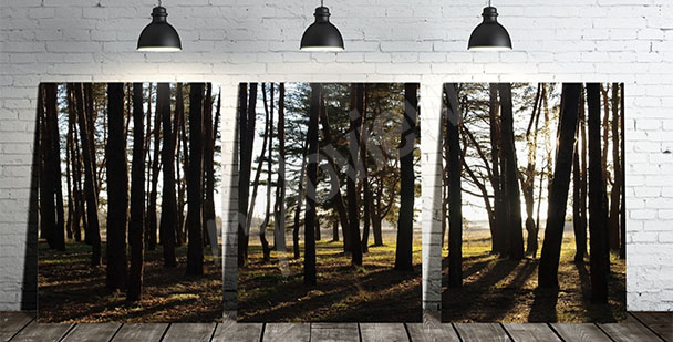 Obraz triptych se stromy