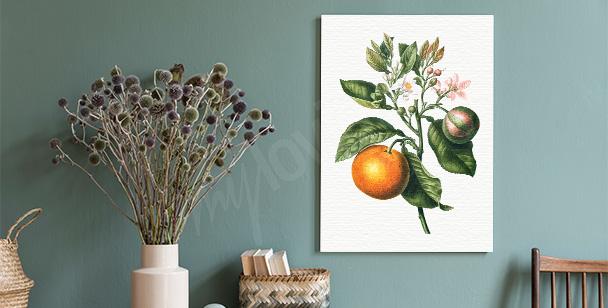Obraz větvička citrusového stromu