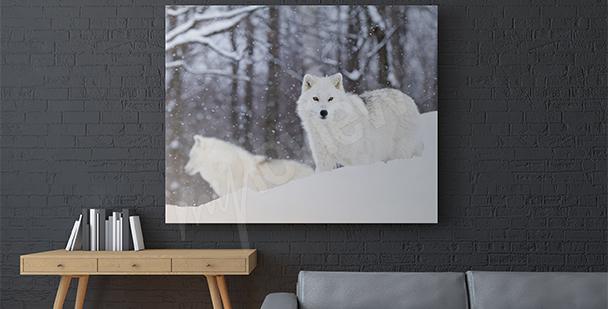 Obraz zvířata Arktidy
