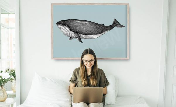Plakát ilustrace velryby