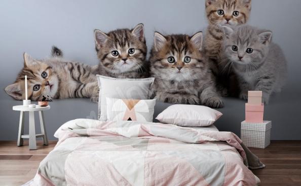 Tapeta kočky v ložnici
